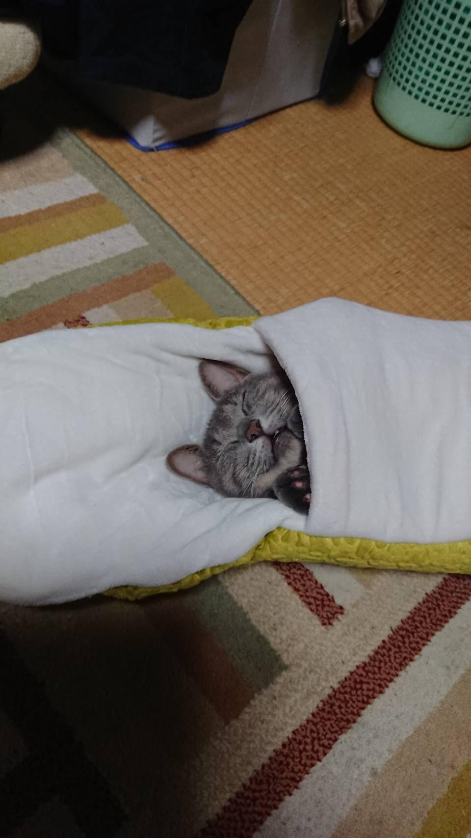 ▲▼ 貓被蛇吃。(圖/翻攝自推特/@takeda_ma)