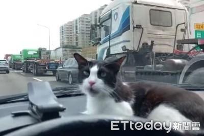媽問「你是1隻什麼」喵秒答:貓