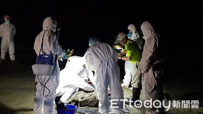 台南沿海首見豬屍 海巡封鎖現場相驗檢疫