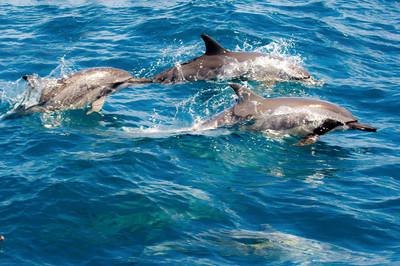 到宜蘭與鯨豚共遊神秘龜山島之旅