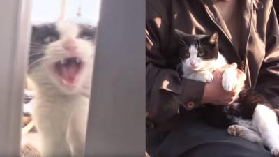 貓的報恩!浪貓不顧性命衝火場 大叔聽到「喵喵叫」驚醒逃出