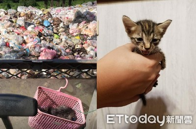 怪手司機徒手翻垃圾掩埋場救出貓