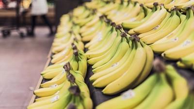 「香蕉末日」倒數中!恐怖TR4病原體爆發 科學家:現在研發新品種太慢