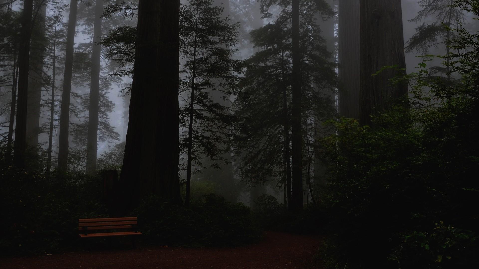 ▲森林。(圖/取自免費圖庫Pixabay)