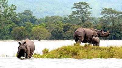 敢殺動物我就殺你!印度政府守護「獨角犀牛」 派護林員射殺盜獵者