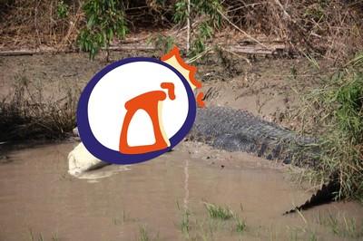 她目睹5.5公尺巨鱷吞食4公尺同類