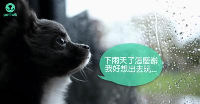颱風季小心「鉤端螺旋體病」!