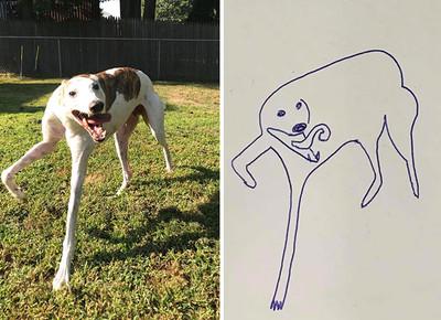 她畫狗狗怪姿勢PO網 竟開啟系列接龍