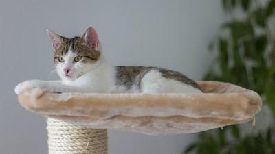 貓咪也需要獨處空間!利用家具營造「避風港」 舒緩喵皇的焦慮情緒