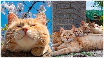 「自由貓」大量出沒!日本超療癒島喵日常 貓奴必追IG看了好想擼~