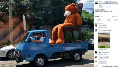 橘棕色萌熊出巡 網狂抓亮點:安全帶呢?