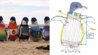 企鵝毛衣募集中!民眾瘋為企鵝織毛衣...然而萌樣背後有段心疼故事