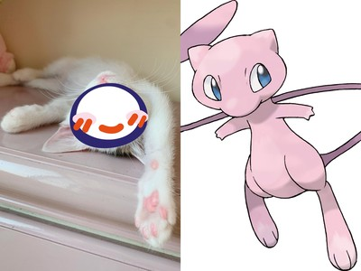 浪貓絕美碧藍雙眼神似「寶可夢」