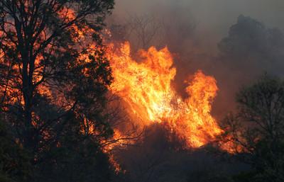 澳洲火燒100公頃 66歲義消護家遭火吻