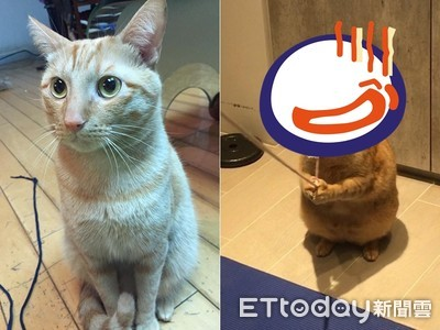 深情帥貓4年胖4kg 腫成六頭身!