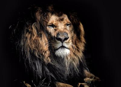 偵探迷必看!「獅子殺人前還微笑」解密