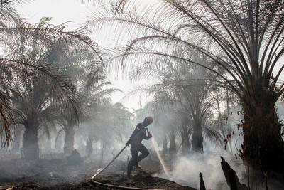 亞馬遜+印尼野火狂燒 溫室效應逼臨界點