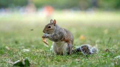 松鼠會偷聽小鳥聊天!利用聲音辨識周圍安全度 聽到天敵直接開溜