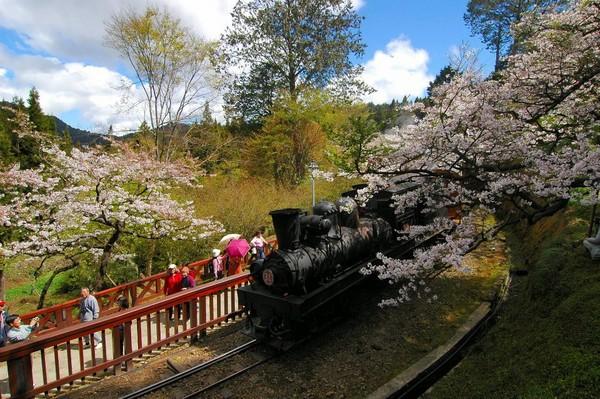 櫻花季即將來臨 全台15個人氣賞櫻名所懶人包