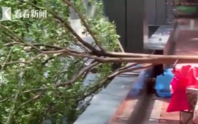 86歲老奶奶坐樹下乘涼...被鋸斷樹木砸死