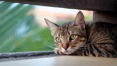 工地施工轟隆聲=喵皇大敵!獸醫:對貓來說跟鬼一樣可怕