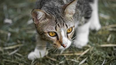 上一秒才討摸、下一秒就伸爪!沒確認過眼神 小心被貓主子唾棄