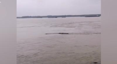 三峽大壩驚現「水怪」 工作人員撈到了