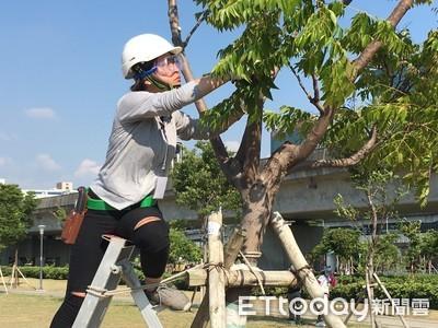 樹木修剪認證課程17日開放報名