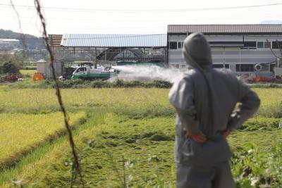 非洲豬瘟擴散 南韓又一區淪陷