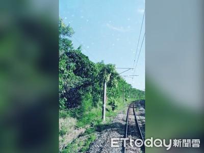 狂風吹落樹枝掛電車線 台鐵花蓮一度延誤