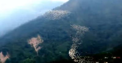 萬鷺朝鳳梅山特有奇景 鳥群隊形變化太驚豔