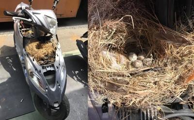 機車拆開炸出一團黃枯草 裡面還有4顆蛋