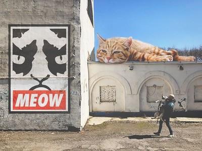 歡迎光臨巨貓世界