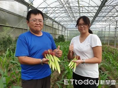 養綠繡眼吃蟲 溫室栽種玉米筍