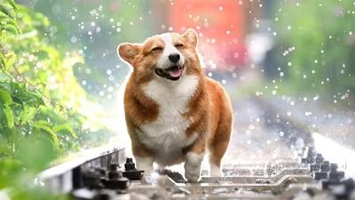 看到的全吃光!狗狗自然本能「把胃袋當冰箱」 餵多反而肥壞牠