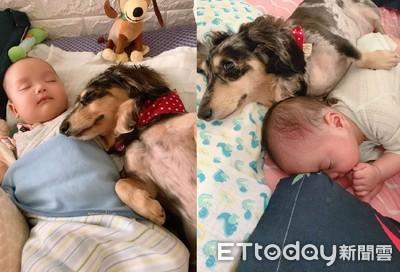 汪保母「甜靠」寶寶入睡 網融化