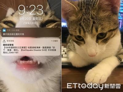 防災警報剛響 貓秒躲床下媽傻眼