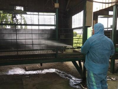 彰化民宅養雞鴨鵝 感染禽流感
