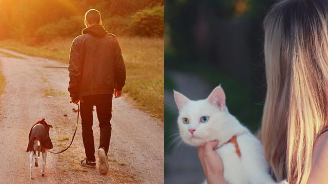精闢分析「貓奴」和「狗奴」的差別!網友點出中肯共通點:都討厭人類
