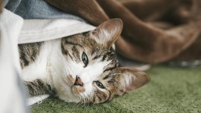 給奴才最後的溫柔!貓咪臨終「躲起來不讓你看」 寧願自己慢慢沉睡