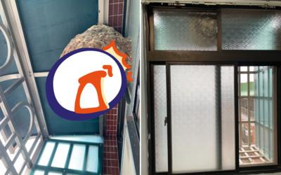 窗戶發現比籃球大蜂窩!網嚇:是虎頭蜂
