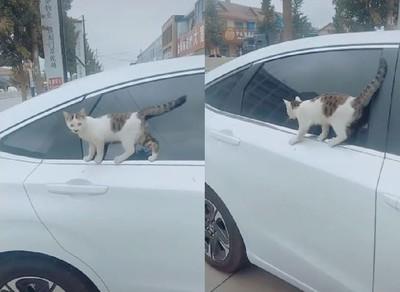飛簷走壁!貓皇沿窗框「走鋼索」