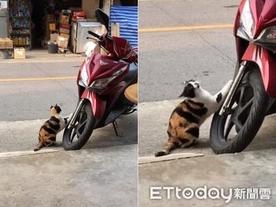 新車輪胎被喵「當貓抓板」狂刷!