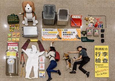 「護國神犬」配合側躺開箱 網融化:太萌啦