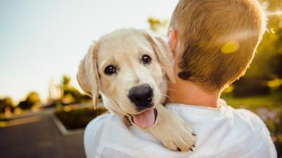 台灣民眾愛毛小孩 寵物保險投保率大成長
