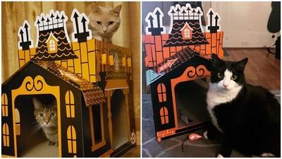 萬聖節「雙層紙箱洋房」內附貓抓板 7.7公斤胖喵也壓不垮!