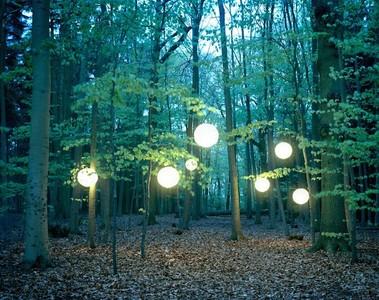 森林之光,驅走你內心深處的迷霧