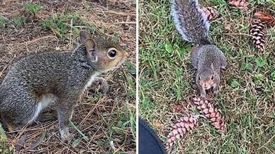 松鼠媽媽伸爪「拉褲管」半路攔截!善心女跟著牠走 意外救了小生命
