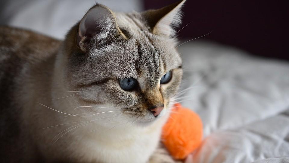 ▲▼貓咪,貓。(圖/取自免費圖庫Pixabay)
