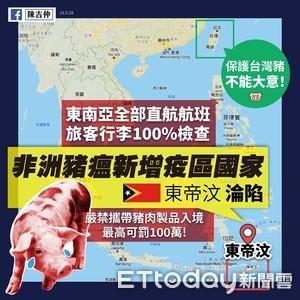 東帝汶爆非洲豬瘟100例!